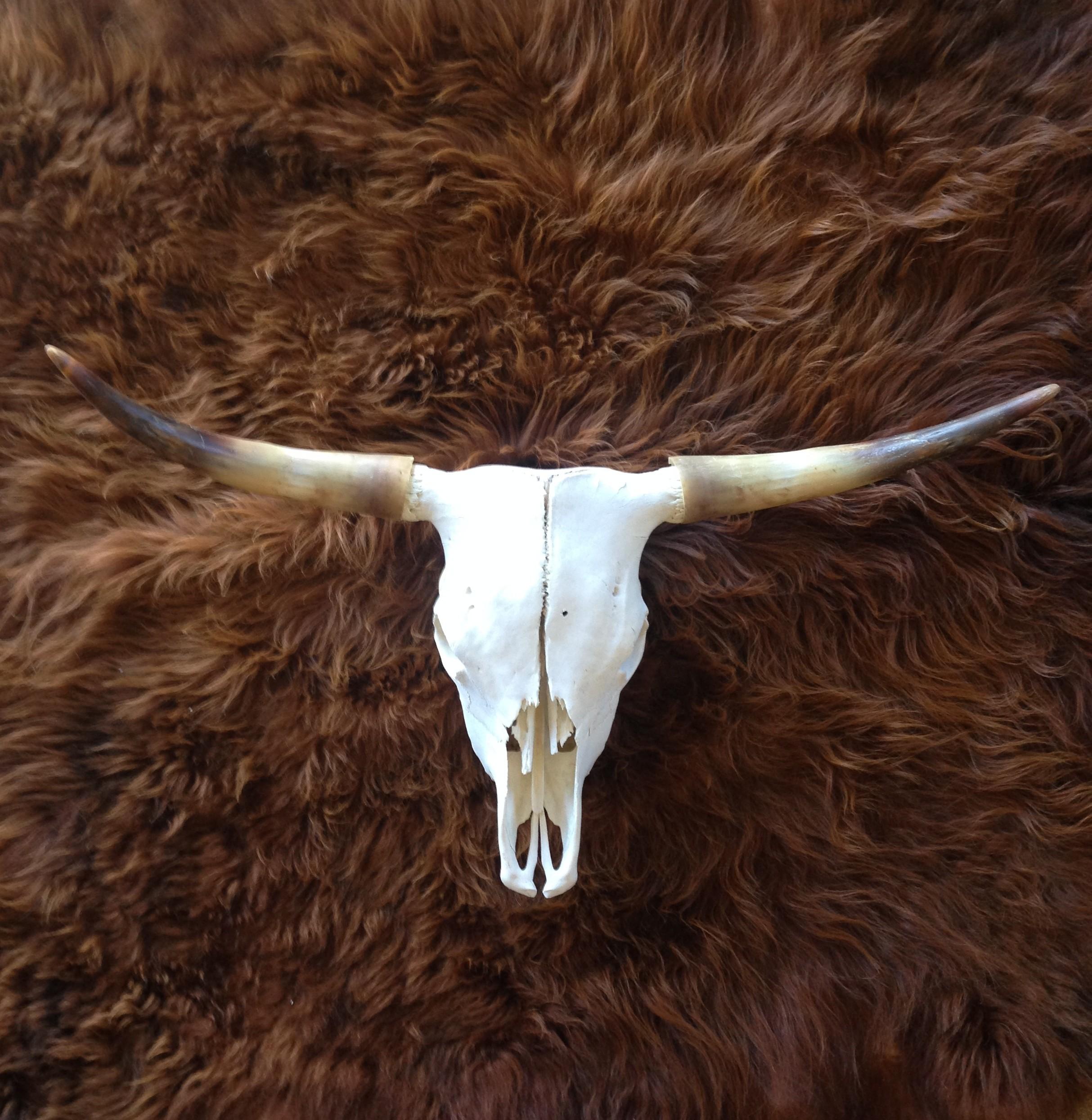White Skull Horns